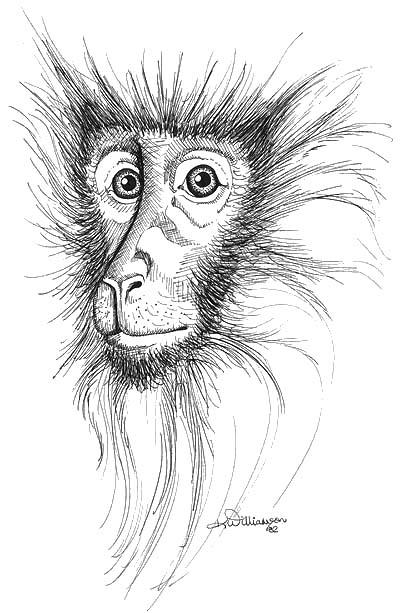 Monkey ink sketch kerri bennett williamson for Ink monkey press