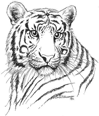 Tiger Ink Sketch Kerri Bennett Williamson
